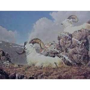 Nancy Glazier   Dall Sheep   Primrose Ridge: Home