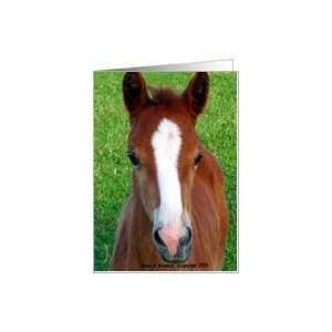 Morgan Horse Foal, Horse ,Any Occasion Card: Health