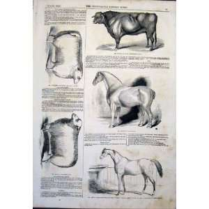 : Agricultural Show Horse Bull Cattle Sheep Ram 1843: Home & Kitchen