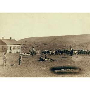 1891 Photograph of Branding Cattle by John Grabill: Home