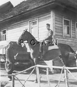 RP  Army  Soldier  NCO  Wagon  Saddle  House  Military Horse  1940s
