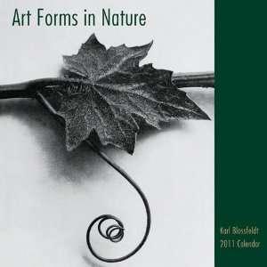 Art Forms in Nature 2011 Standard Wall Calendar Kitchen