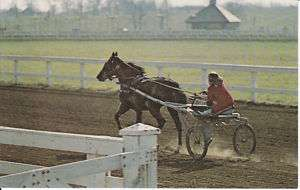 STANDARDBRED RACE HORSE POSTCARD SULKY TRAINING KY