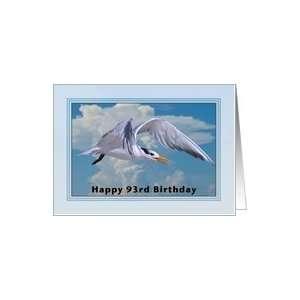 Happy Birthday, 93rd, Royal Tern Bird Card Toys & Games