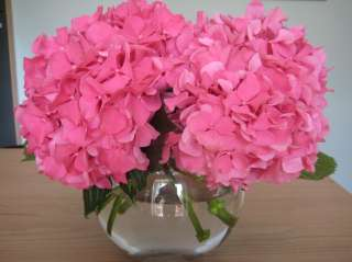 long lasting pink flower clusters will cover these plants in mid to