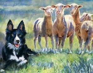 Original Border Collie Sheepdog Sheep Painting Art Dog