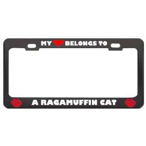 My Heart Belongs To A Ragamuffin Cat Animals Pets Metal License Plate