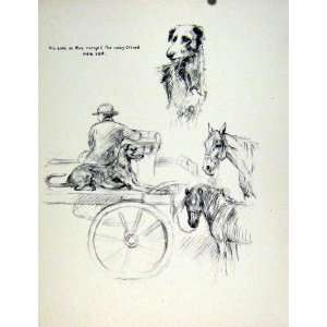Dog Horse Carriage Owner Hound Animal Pet Sketch Old Home