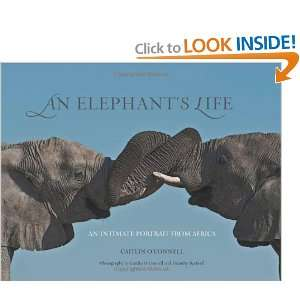 Start reading An Elephants Life: An Intimate Portrait from Africa