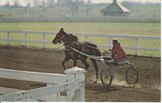 STANDARDBRED RACE HORSE POSTCARD SULKY TRAINING KENTUCKY HORSE PARK